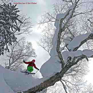 TreeSkiing!...Japan, Kiroro Resort