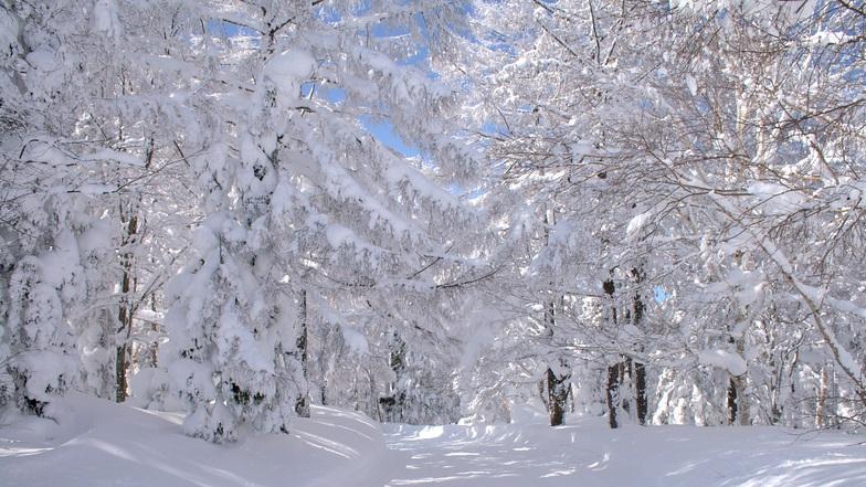 Winter Wonderland., Nozawa Onsen