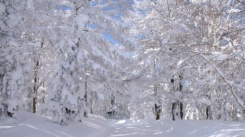 Nozawa Onsen Ski Resort by: Philois