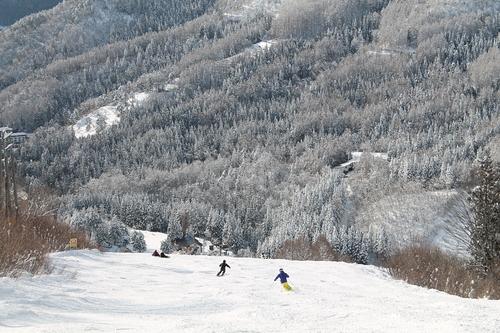 Nozawa Onsen Ski Resort by: masa