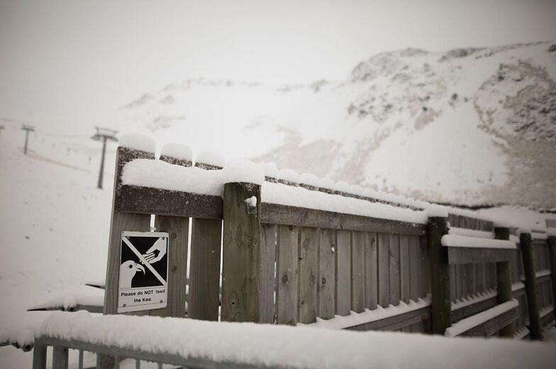 snow arrives, Porters