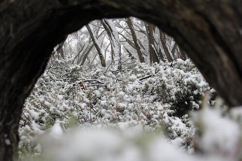 Mount Baw Baw Ski Resort by: Snow Forecast Admin