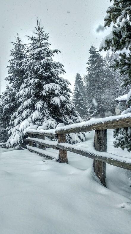 Let it snow, Seli