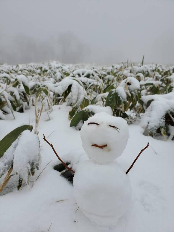 happy winter has arrived, Nozawa Onsen