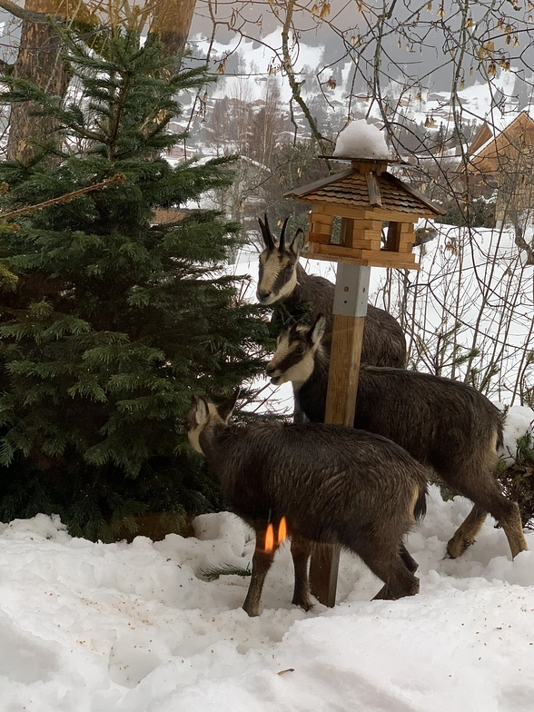 Visit in garden, Villars