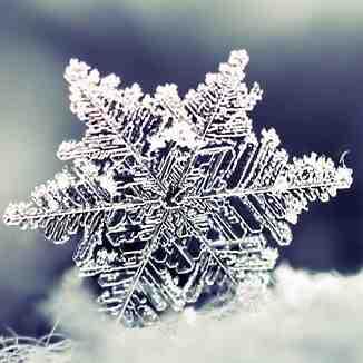 Estrella de nieve, Astún