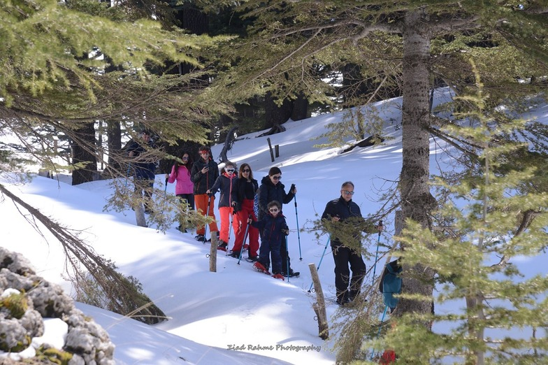 SNOWSHOEING THE ANCIENT GIANT TREES @ CEDARS OF GOD