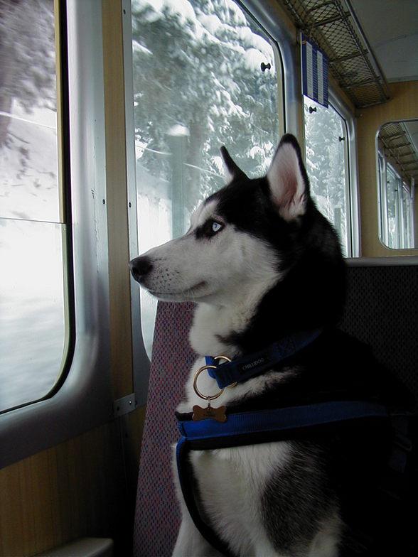 Ysabella seeing Snow, Mürren
