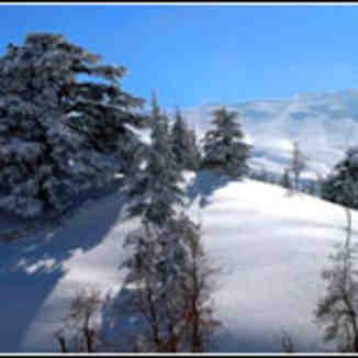 the cedars,lebanon