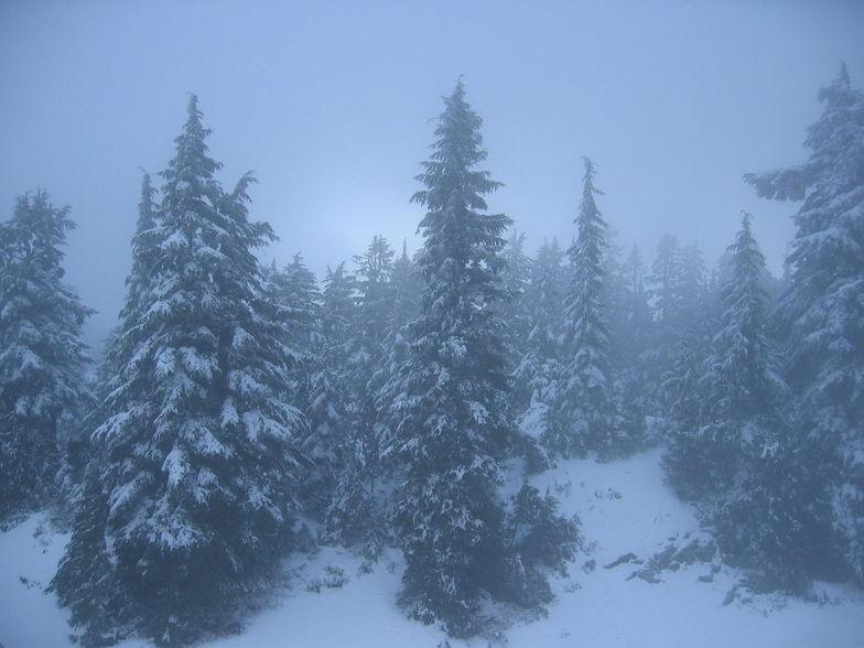Misty Pines, Mt Seymour