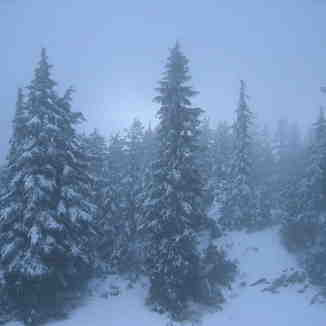 Misty Pines, Mt Seymour
