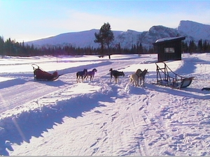 dogsledging, Geilo photo