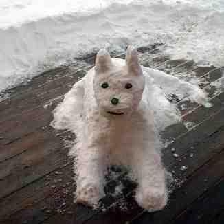Snow Dog, Isola 2000