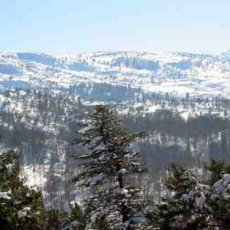 El Kamoua National Park In Winter , Akkar , North Lebanon, Cedars