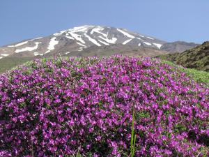 damavand on top, Mount Damavand photo
