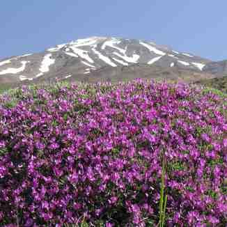 damavand on top, Mount Damavand