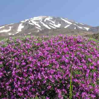 damavand on top, Mount Damavand