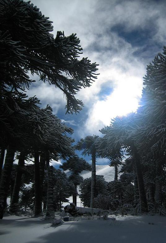 Sol, Corralco (Lonquimay)