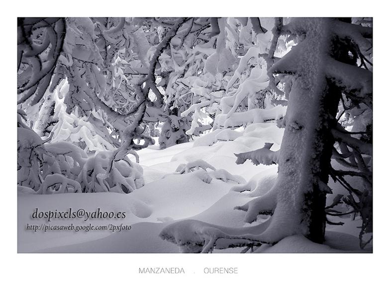 skiing among the pines, Manzaneda