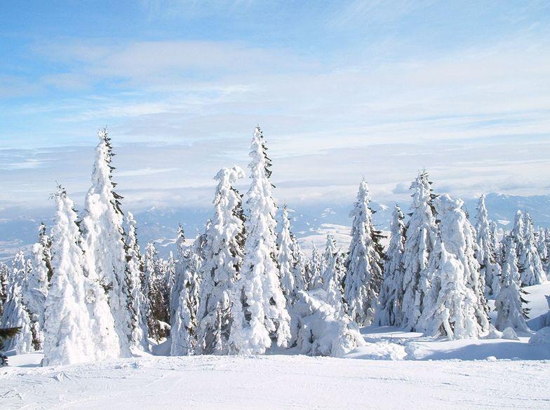 Snow everywhere, Martinky