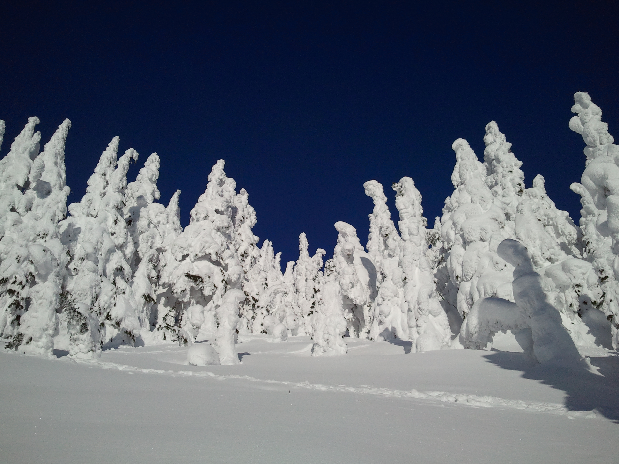 Salivate over this pow..., Stevens Pass