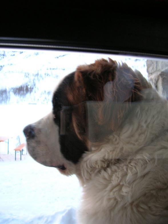 the dog achille, La Thuile