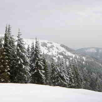 Pine trees, Kojšovsků hoľu/Skipark Erika