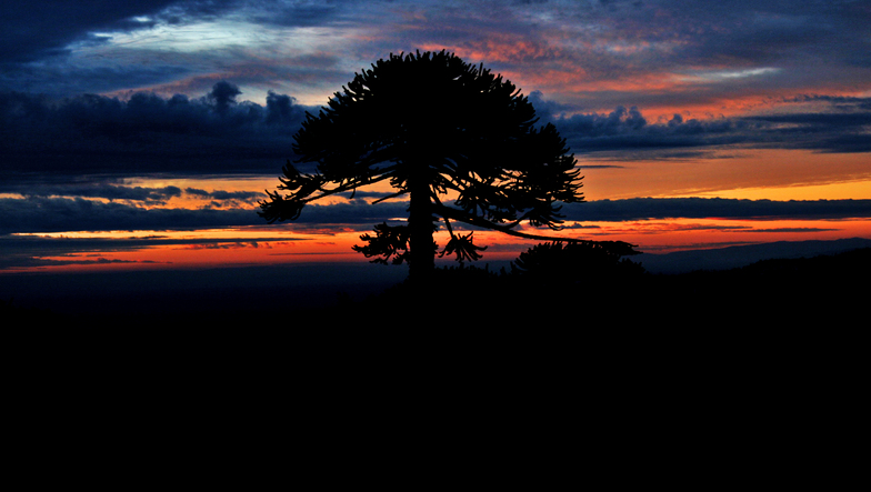 sunset, Las Araucarias