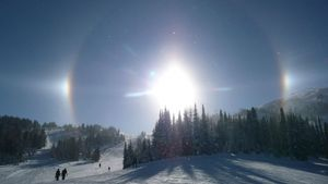 Snow Dogs (very cold), Sunshine Village photo