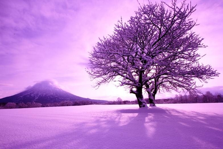 Winter Yotei with Sakura, Niseko Grand Hirafu