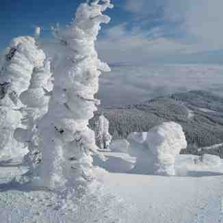 Snow does grow on trees, Mt Baldy Ski Area