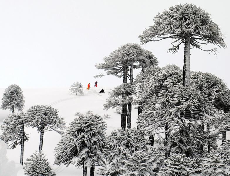Las Araucarias snow