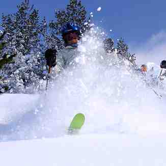 Agressive snow cut bunch, Brezovica
