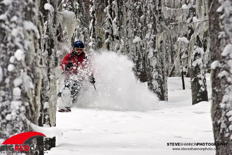 Lee ripping into the trees, Big Red Cats