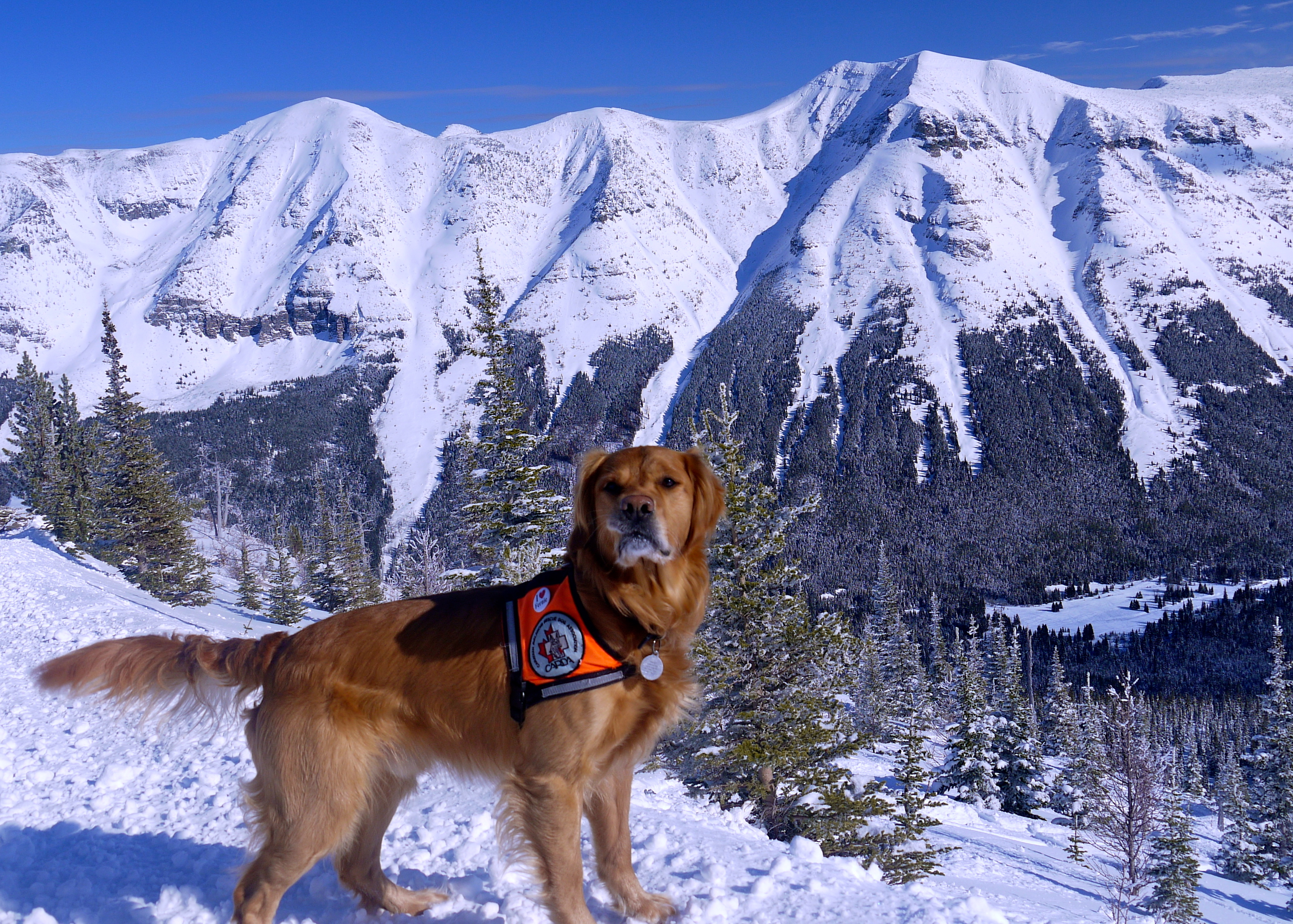 Huck with Barnaby Ridge, Castle Mountain Resort