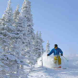 Blue Bird, Castle Mountain Resort