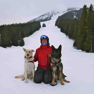 Avalanche Dogs, Castle Mountain Resort