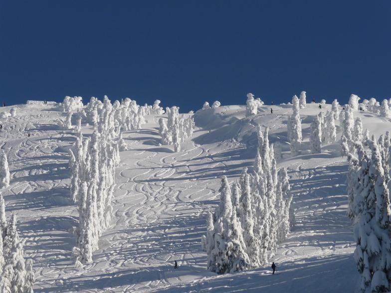 Mount Washington bluebird