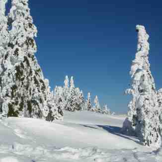 Snow Ghosts, Cypress Mountain