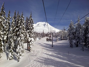 t line, Timberline photo