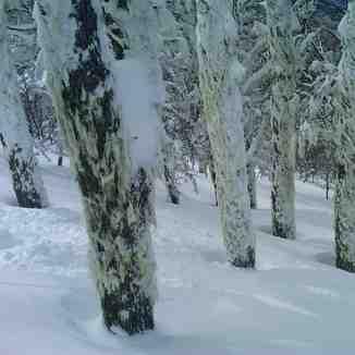 outstanding powder tree skiing, Cerro Catedral