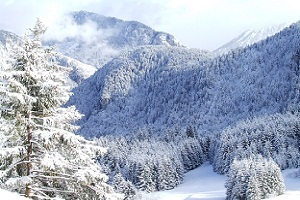 Fresh Snow in Drouzin Le Mont photo